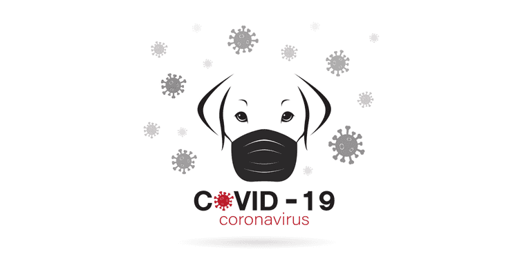 COVID-19 And Pets Do Pets Or Animals Spread Novel Coronavirus