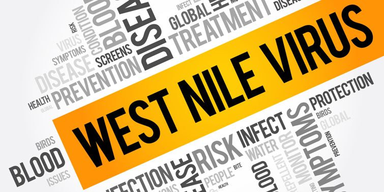 WNV West Nile Virus Spotted Again In India, Government Taking Measures To Stop Further Spreading