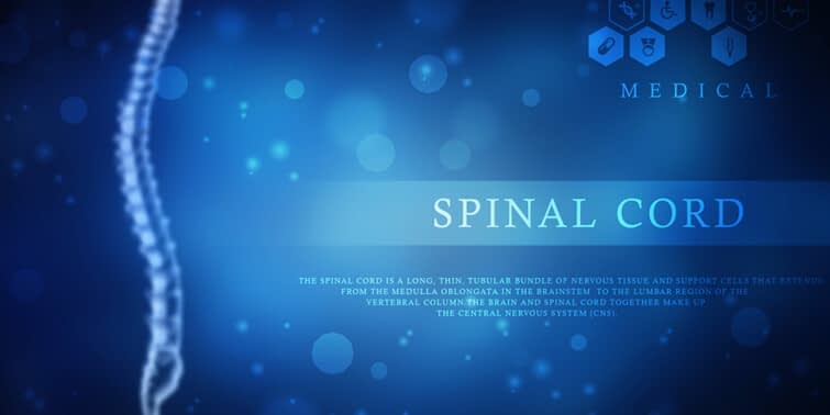 Spinal Cord Is More Brilliant Than We Assumed, Specially For Hands